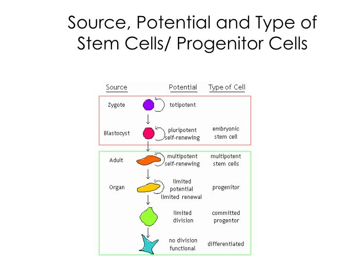 Source, Potential and Type of Stem Cells/ Progenitor Cells