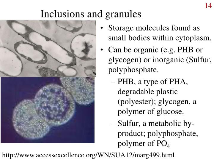 Inclusions and granules