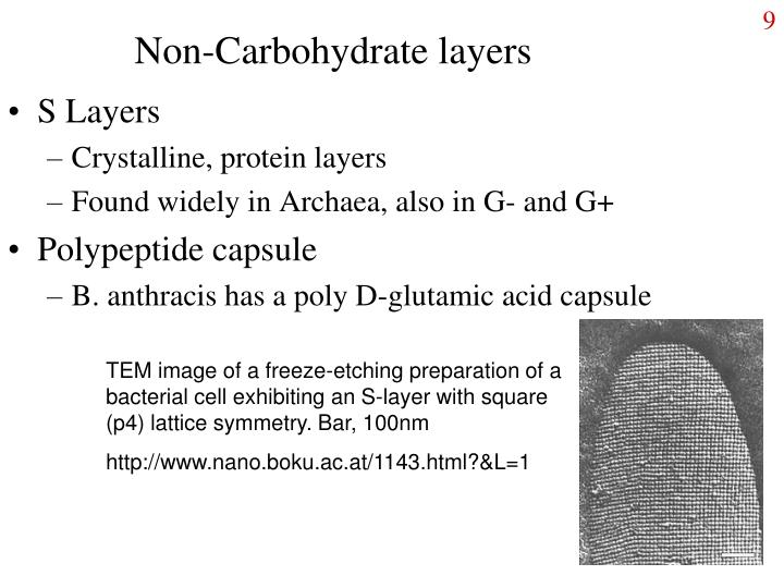 Non-Carbohydrate layers