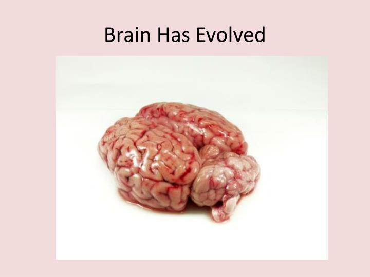 Brain Has Evolved