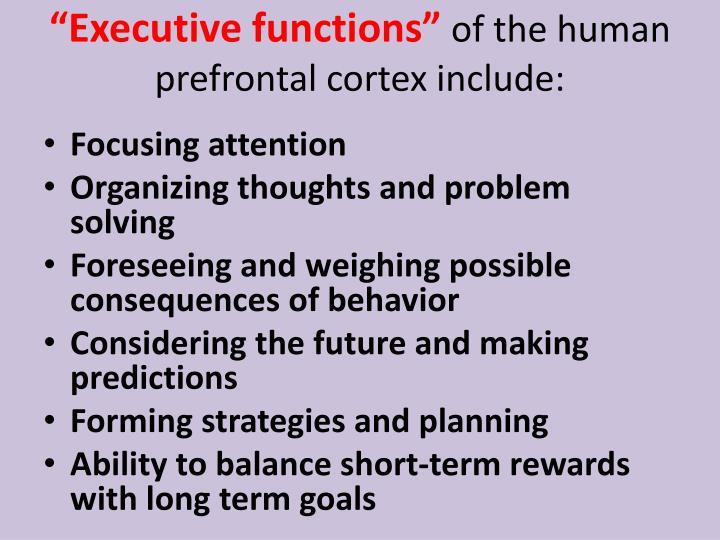"""""""Executive"""