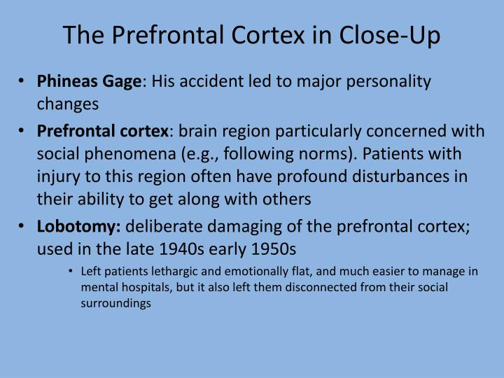 The Prefrontal Cortex in Close-Up