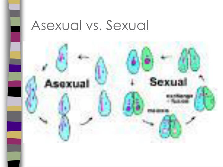 Asexual vs. Sexual