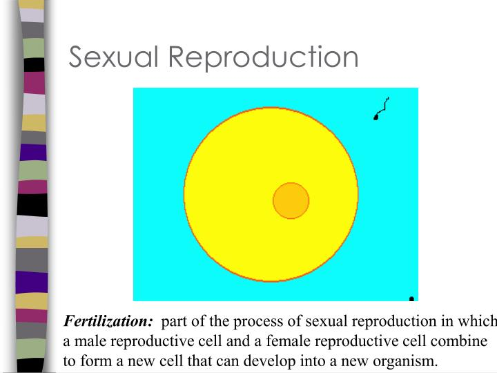 Sexual Reproduction