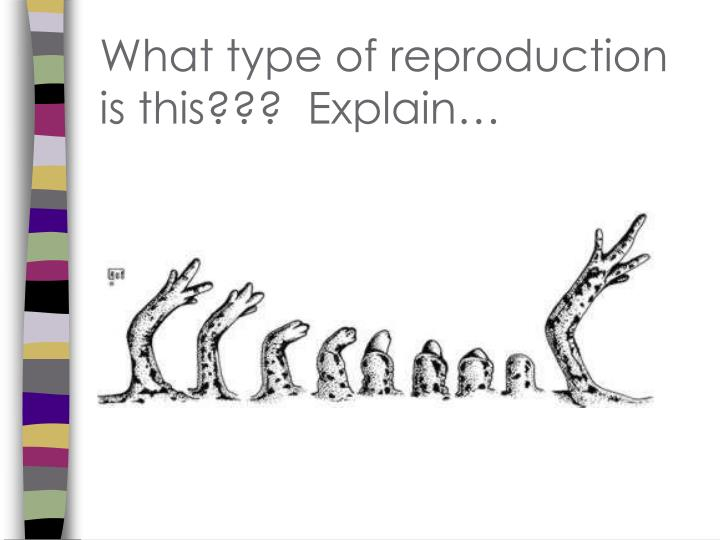 What type of reproduction is this???  Explain…
