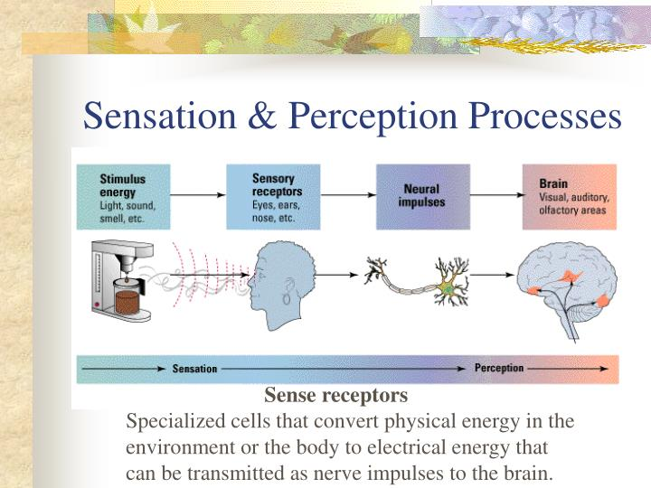 Sensation & Perception Processes
