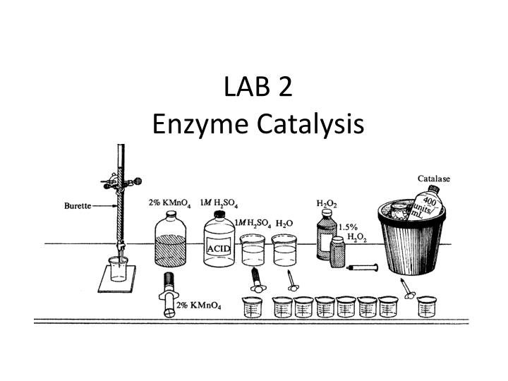 lab 2 enzyme catalysis essay Free and custom essays at essaypediacom take a look at written paper - ap laboratory : enzyme catalysis.