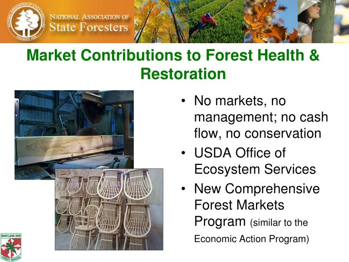 Market Contributions to Forest Health & Restoration