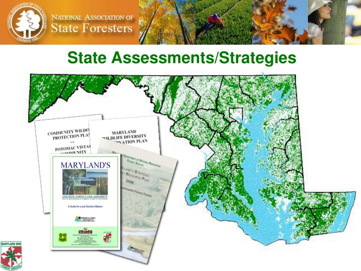 State Assessments/Strategies