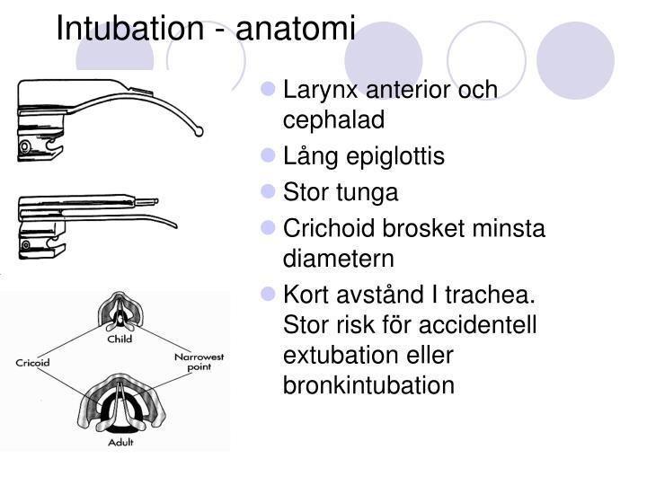 Intubation - anatomi