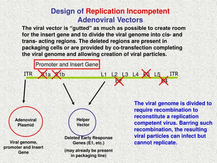 Promoter and Insert Gene