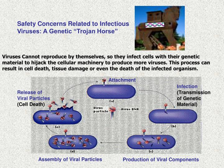 "Safety Concerns Related to Infectious Viruses: A Genetic ""Trojan Horse"""