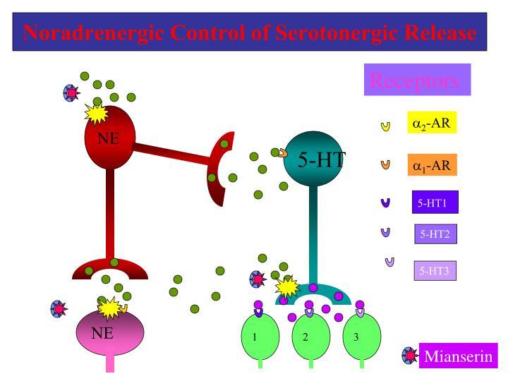 Noradrenergic Control of Serotonergic Release