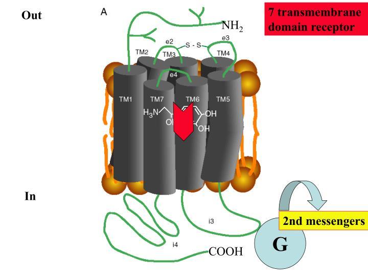 7 transmembrane