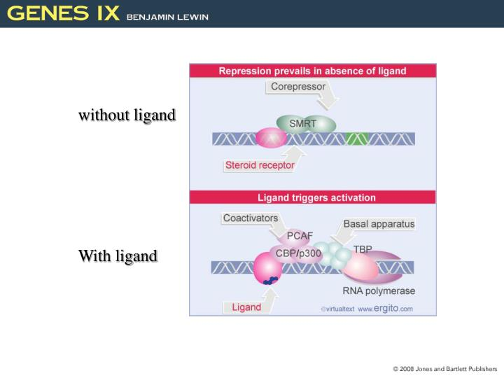 without ligand