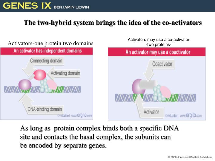 The two-hybrid system brings the idea of the co-activators
