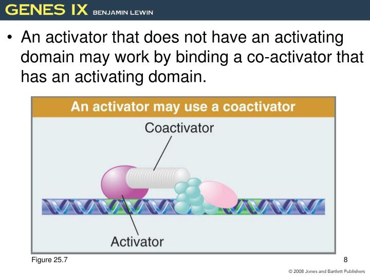 An activator that does not have an activating domain may work by binding a co-activator that has an activating domain.