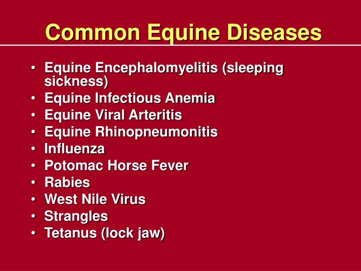 Common Equine Diseases