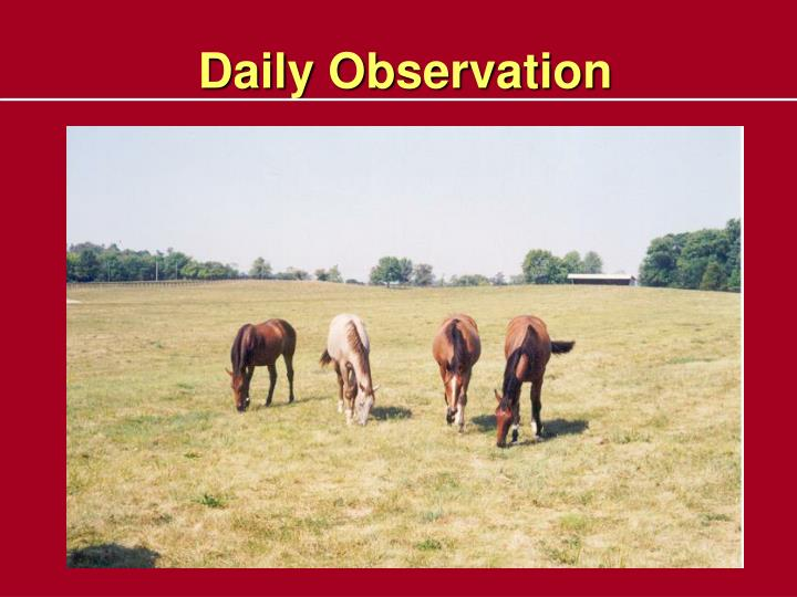 Daily Observation