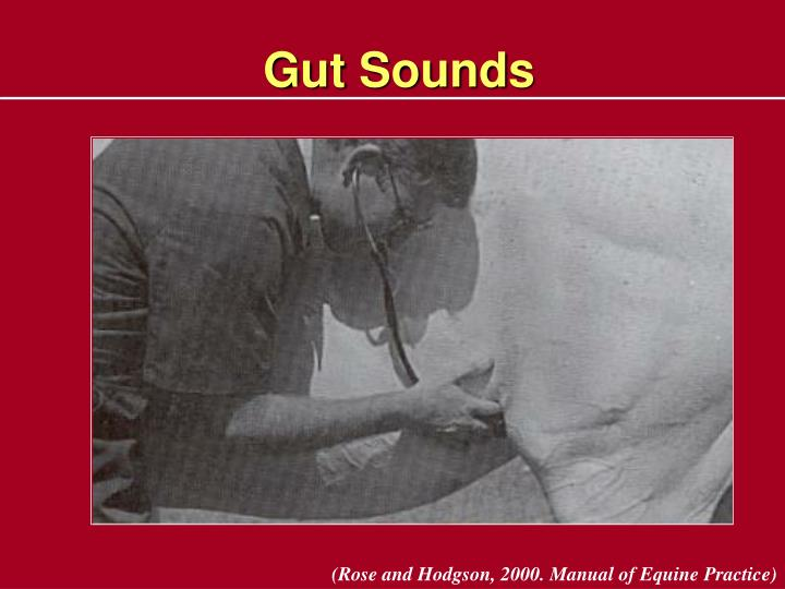 Gut Sounds