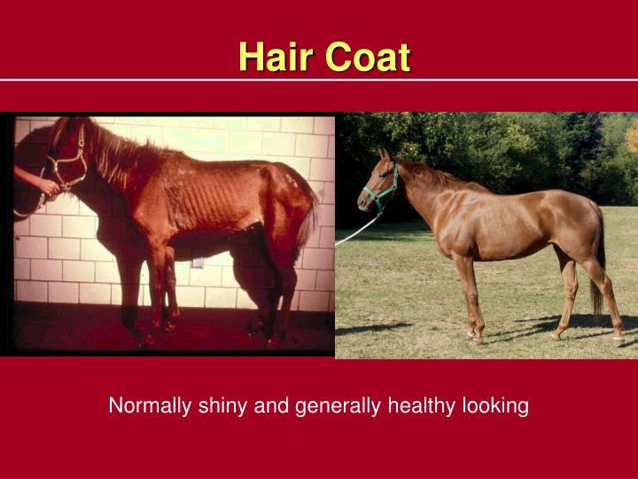 Hair Coat