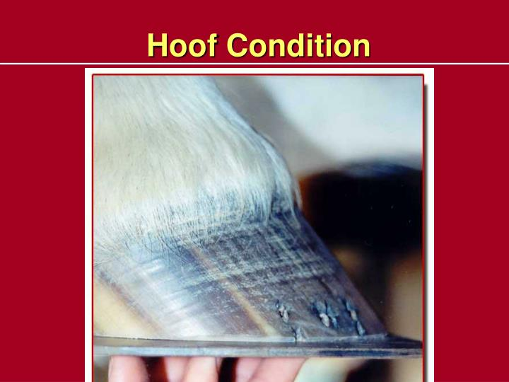 Hoof Condition