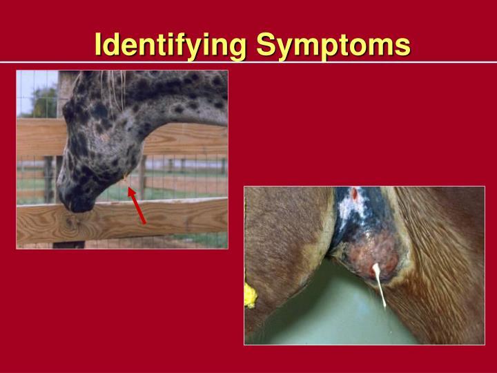 Identifying Symptoms