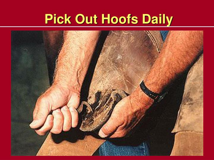 Pick Out Hoofs Daily