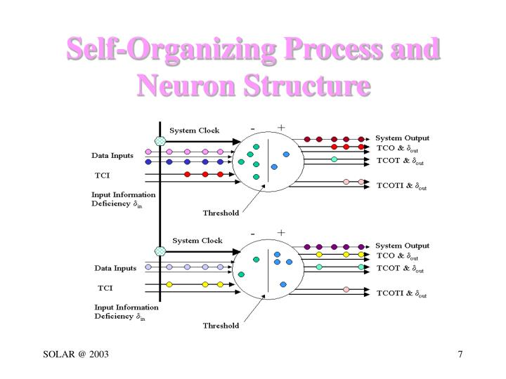 Self-Organizing Process and Neuron Structure
