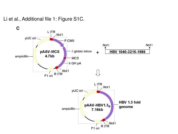 Li et al., Additional file 1: Figure S1C.