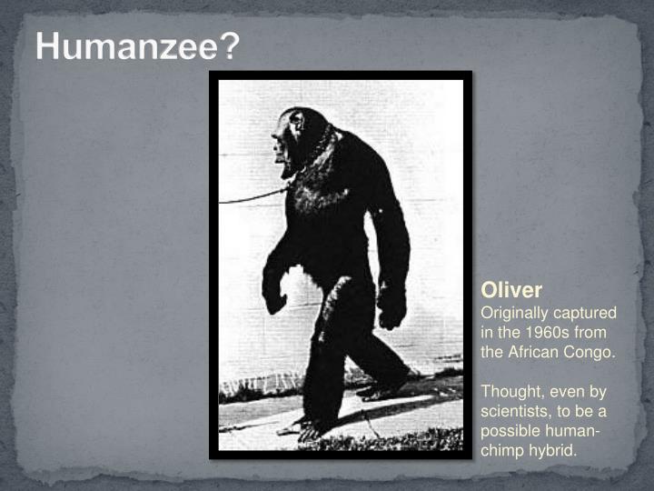 Humanzee?