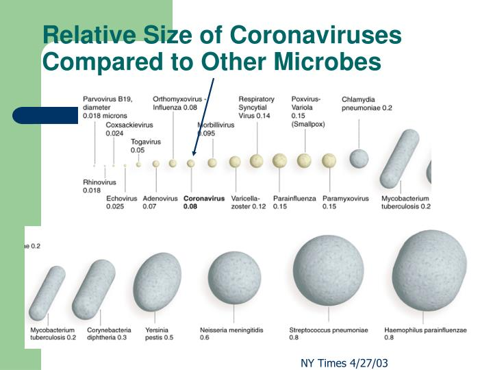 Relative Size of Coronaviruses Compared to Other Microbes