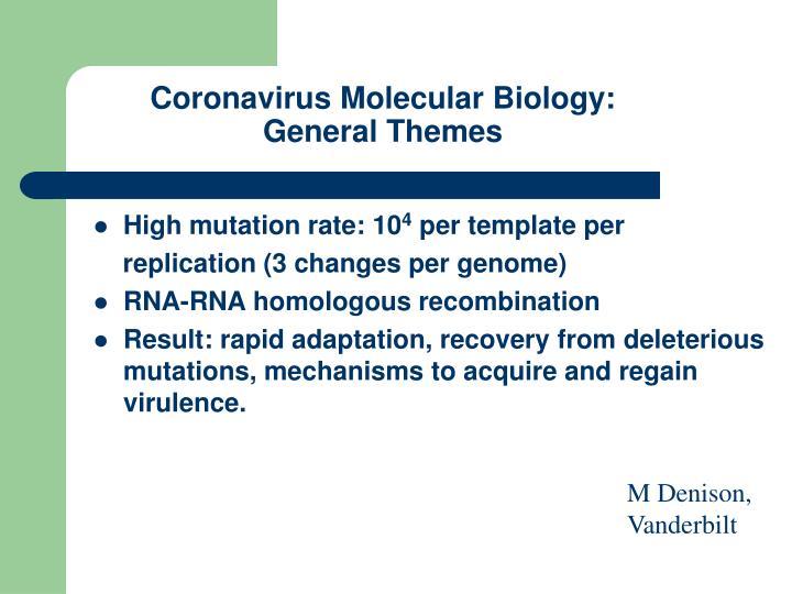 Coronavirus Molecular Biology: