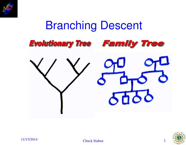 Branching descent