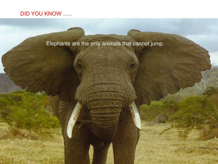 DID YOU KNOW …..