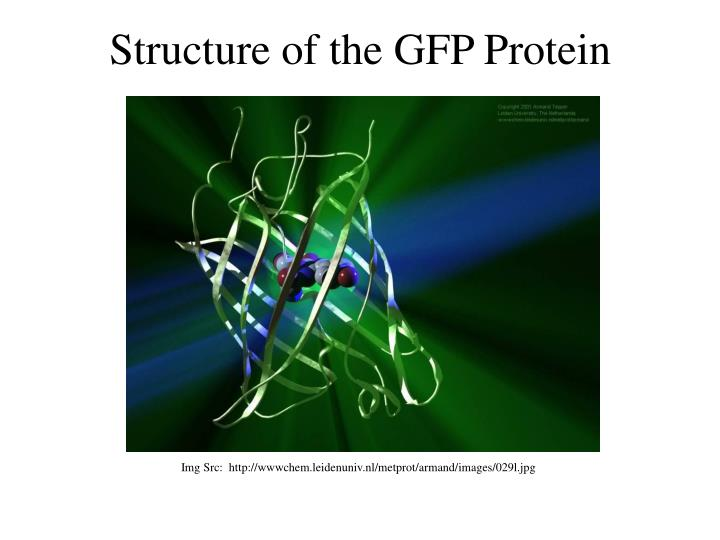 Structure of the GFP Protein