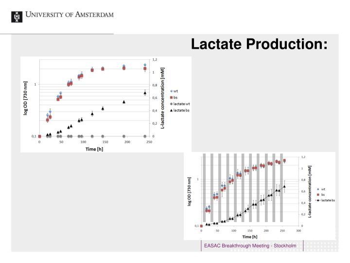 Lactate Production:
