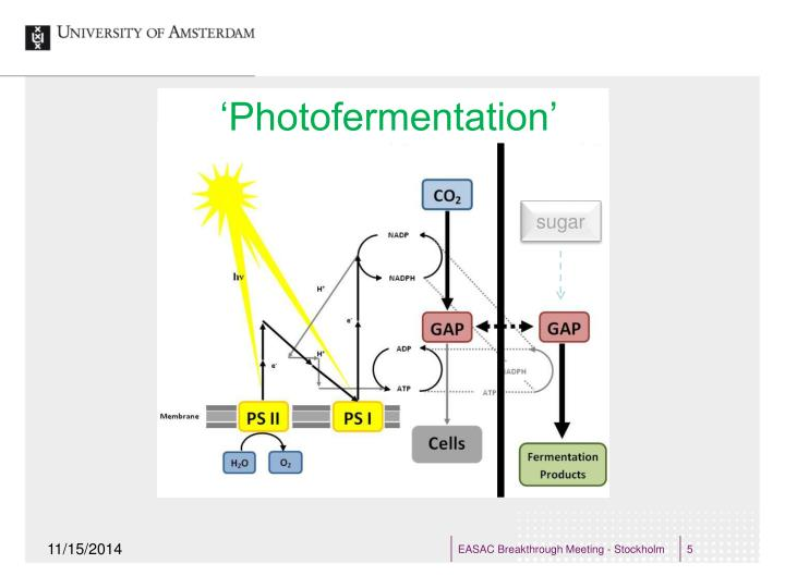 'Photofermentation'