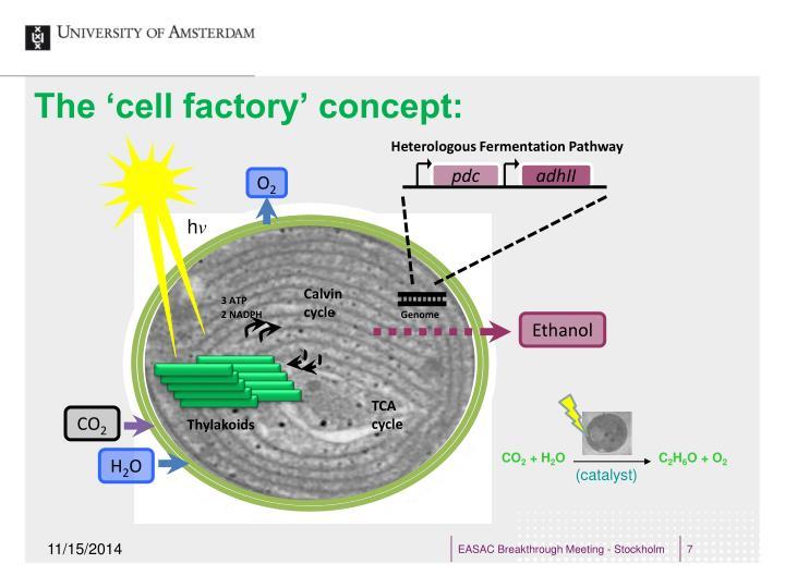 Heterologous Fermentation Pathway
