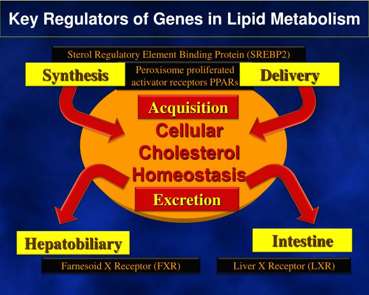 Key Regulators of Genes in Lipid Metabolism