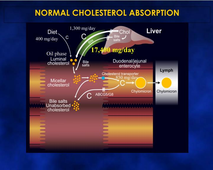 NORMAL CHOLESTEROL ABSORPTION