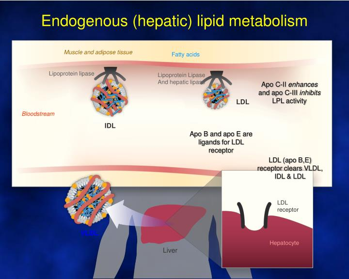 Endogenous (hepatic) lipid metabolism