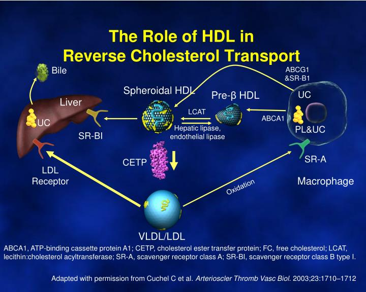 The Role of HDL in