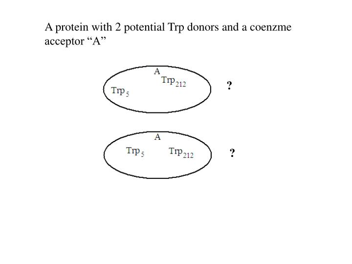 "A protein with 2 potential Trp donors and a coenzme acceptor ""A"""