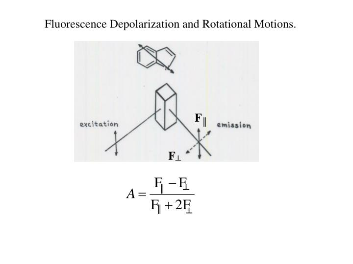 Fluorescence Depolarization and Rotational Motions.