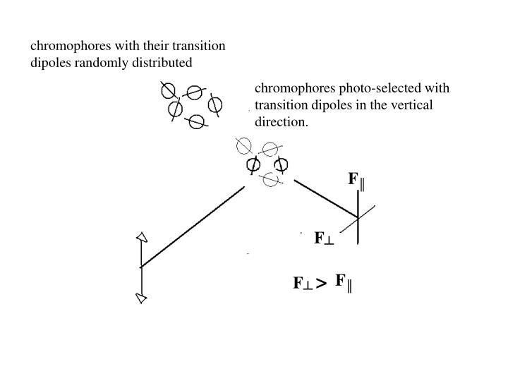 chromophores with their transition dipoles randomly distributed