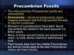 precambrian fossils