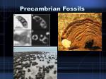 precambrian fossils1