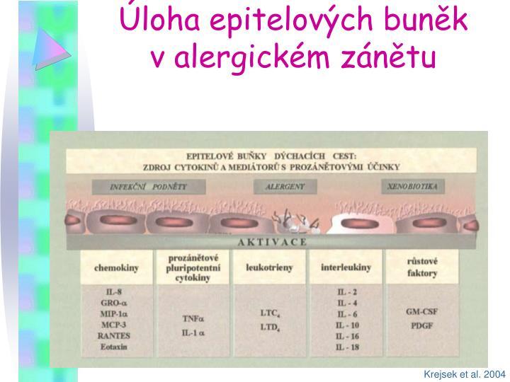 Úloha epitelových buněk