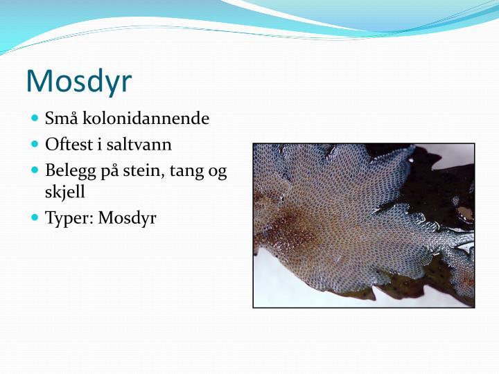Mosdyr